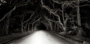 bleak-hall-plantation-road